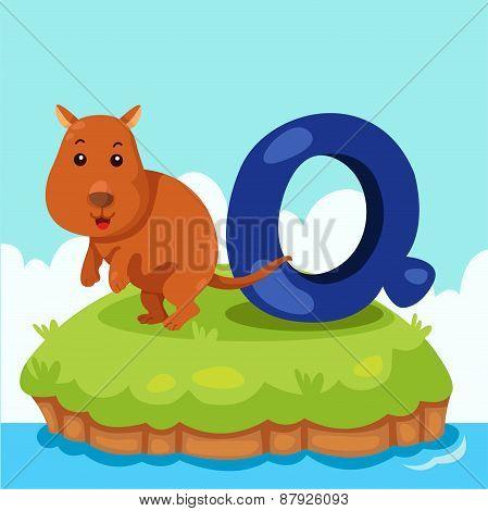 Illustrator of Letter 'Q is for quokka'