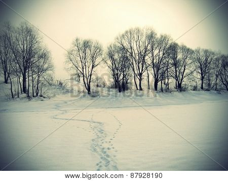 Winter Landscape With Trees And Traces On A Snow