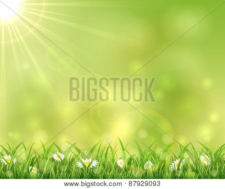 Sunny Background With Grass And Flowers