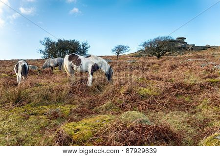 Ponies On Sharp Tor