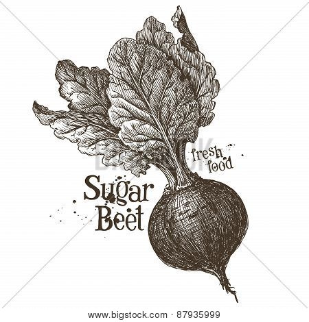 beet vector logo design template. fresh vegetables, food or harvest icon.