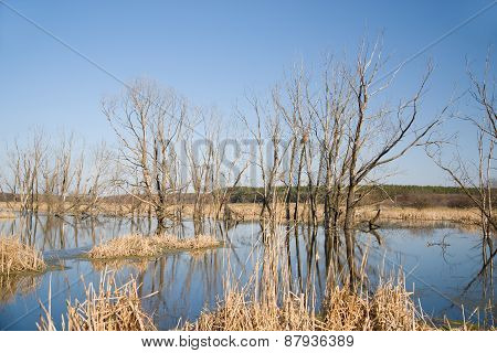 Old Trees On The Bank Of The River In The Spring Against The Blue Sky