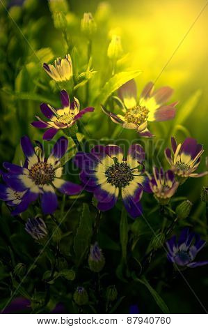 Blue Flowers At Sunrise