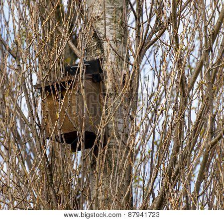 Little Bird Nest House