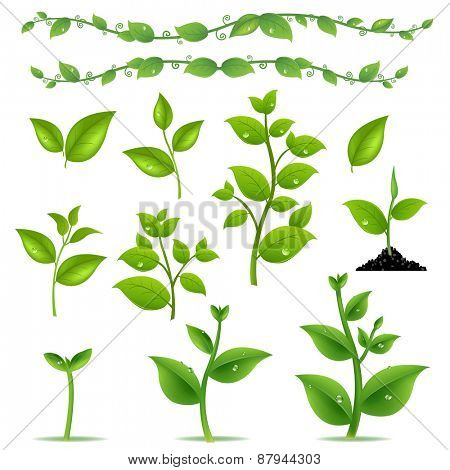 Set Leaves And Plants With Gradient Mesh, Vector Illustration