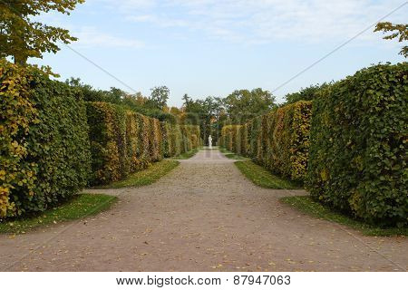 Passage inside Hedge Maze