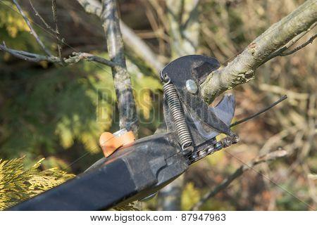 Gardening - Pruning Tree