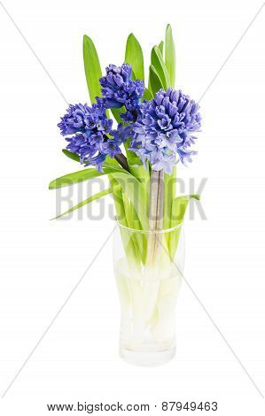 Bouquet Of Fresh Hyacinths Isolated Over White