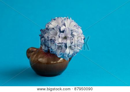 Hyacinth In Vase On Blue Background. Selective Focus