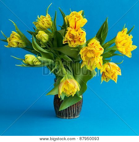 Bouquet Of Fresh Spring Yellow Tulips On Blue Background