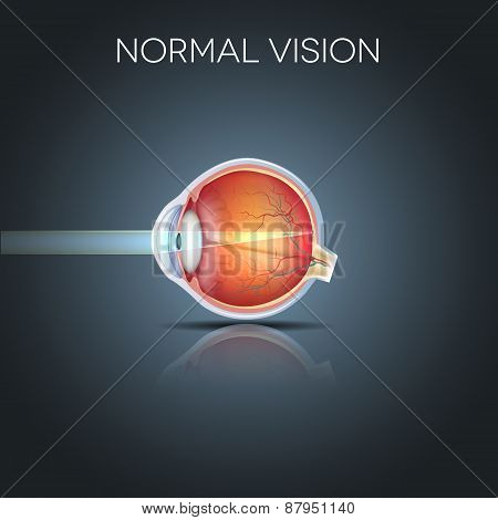Normal Eye Vision