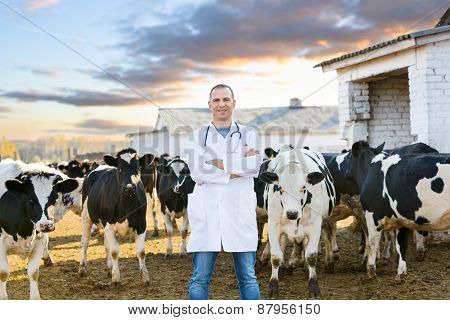 veterinarian at  farm cattle