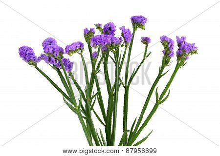 Limonium Sinuatum Flower