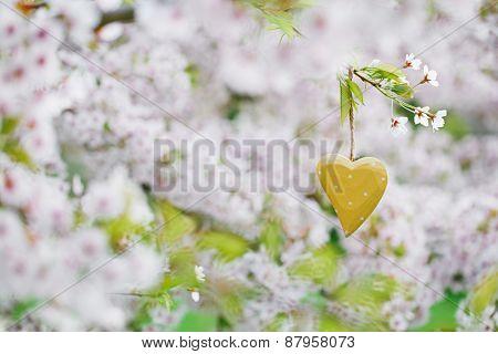 wooden heart in Spring with blossom cherry flower sakura