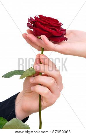 A Man Giving A Rose To A Woman Isolated On White