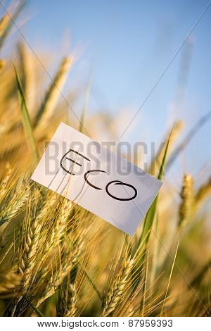 Small Paper With Eco Message On Whole Grain Plants