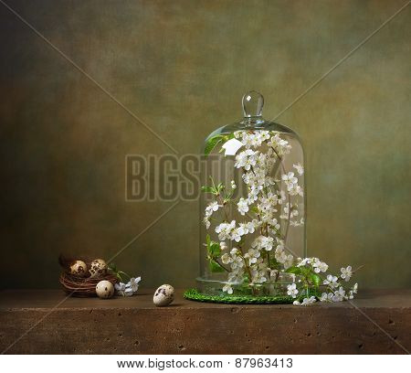 Still life with cloche with flowering tree branches
