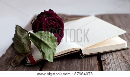 Dried Rose Laying Over An Open Book Close Up
