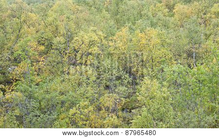 Taiga forest, trees close to a mountain slope.