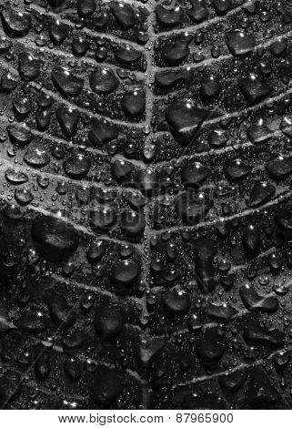 Rain drops on leaf.
