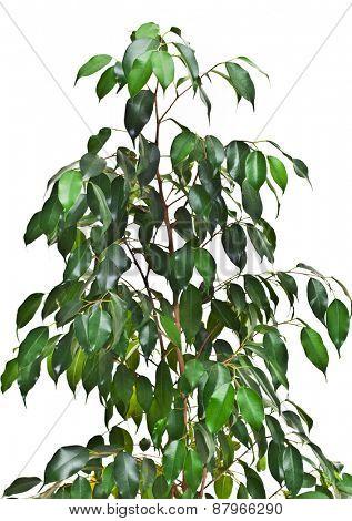 House plant tree