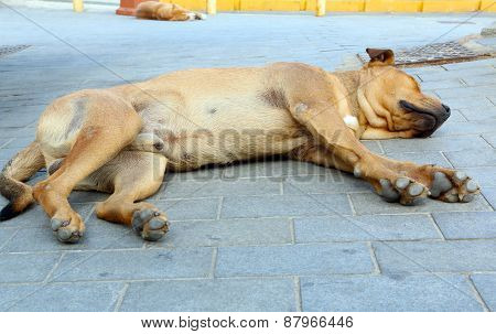 Two dogs sleeping in the city