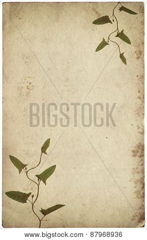 Old Vintage Paper Texture With Dry Grass Leaves