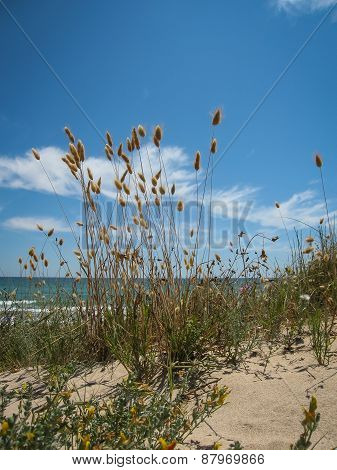 The Beach El Saler, Valencia Y Murcia, Spain