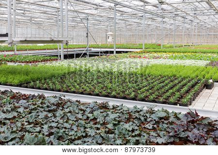 Greenhouse With Cultivation Of Several Plants And Flowers