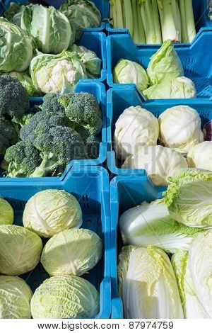 Assortment of green with white cabbages and vegetables