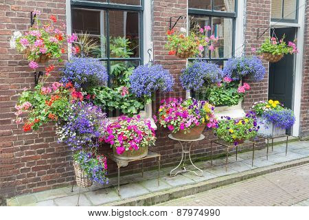 Many flowering pottery plants at facade of house