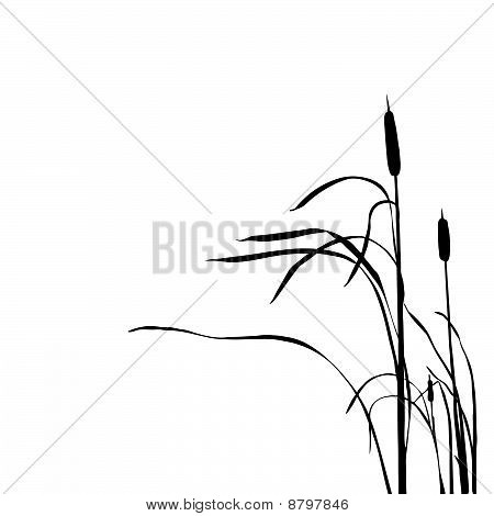 vector illustration of the reed on white background