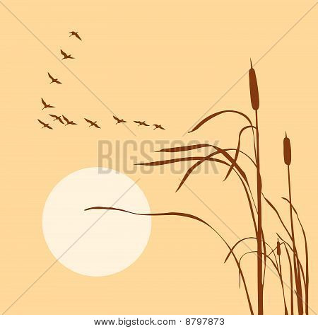 vector illustration of the geese in sky on solar background