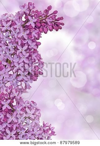 light lilac flowers on blurred background