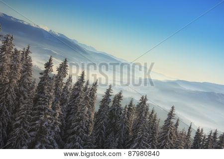 Christmas Tree In The Mountains