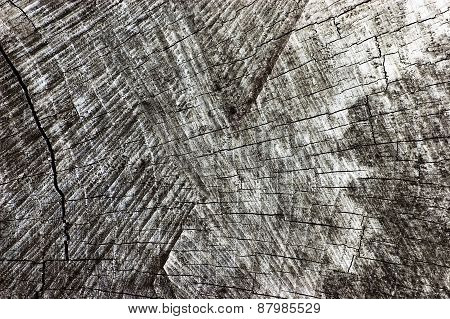 Natural Weathered Grey Tree Stump Cut Texture, Large Detailed Old Aged Gray Lumber Background