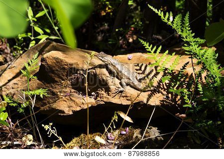 Lizard Sunning On Red Rock Amid Green Plants