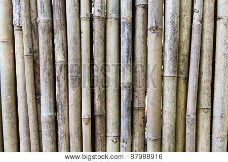 background and texture concept - bamboo cane wall