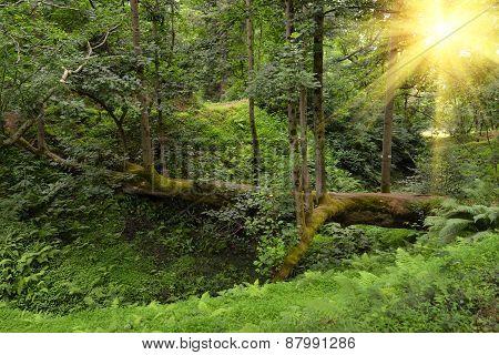 Pathway From Tree In Sunlight Botanical Garden Georgia Batumi