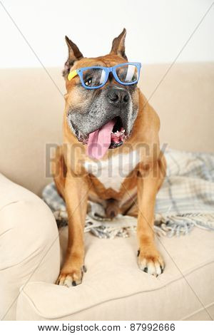 Cute dog in funny glasses sitting on sofa, on home interior background