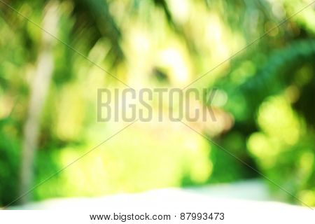 Abstract blurred view of exotic plant in resort