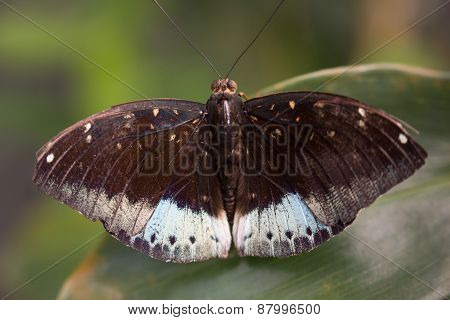 the butterfly on green leaves