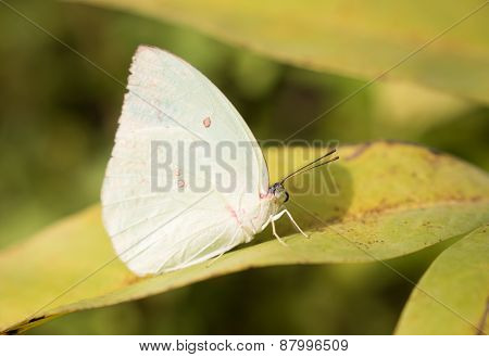 White butterfly on green leaves