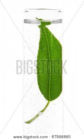 Green leaf in test tube isolated on white