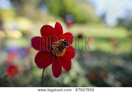 Bee Flower Pollenation
