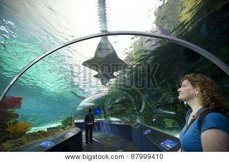 Shark tank at Ripleys Aquarium