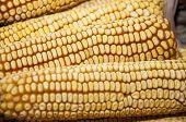image of maize  - Corn fruit - JPG
