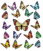 image of monarch butterfly  - Set of different colorful butterflies - JPG