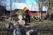 picture of sawing  - Lumberjack cuts a wind fallen tree with a chain saw - JPG