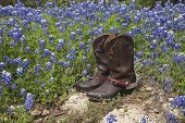 foto of spurs  - A brown leather pair of cowboy boots with spurs sits on rock in a field of Texas bluebonnets - JPG